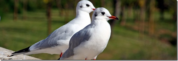 Two Seagulls